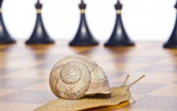 Slow chess